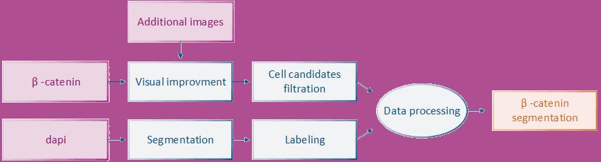 cell segmentation diagram v2