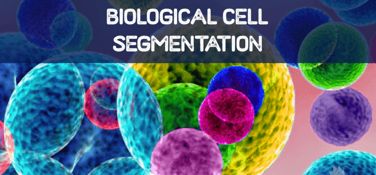 Biological Cells Segmentation