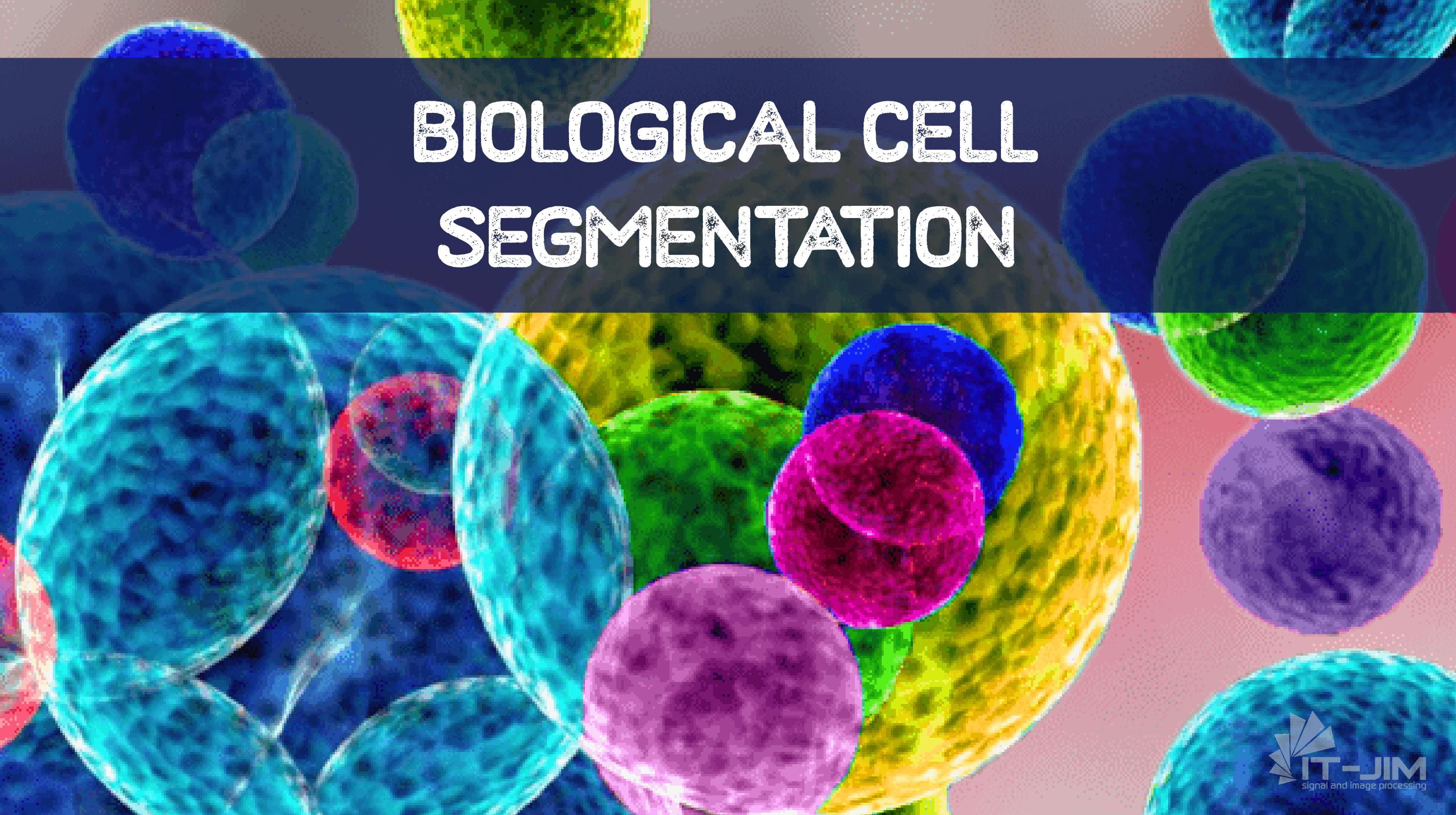 Biological Cells Segmentation